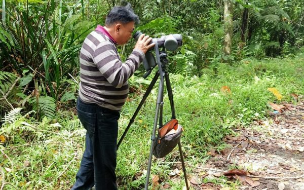 peter-roberts-birding-tours-to-gunung-gede-on-west-java-and-kerinci-seblat-national-park-includeded-tapan-road-on-jambi-and-the-waykambas-np-on-lampung-17