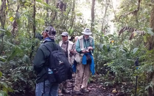 peter-roberts-birding-tours-to-gunung-gede-on-west-java-and-kerinci-seblat-national-park-includeded-tapan-road-on-jambi-and-the-waykambas-np-on-lampung-20