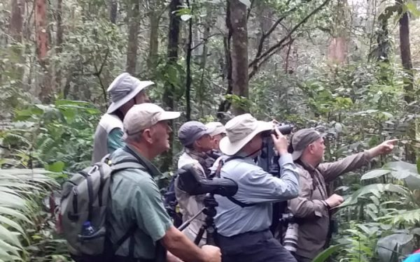 peter-roberts-birding-tours-to-gunung-gede-on-west-java-and-kerinci-seblat-national-park-includeded-tapan-road-on-jambi-and-the-waykambas-np-on-lampung-23