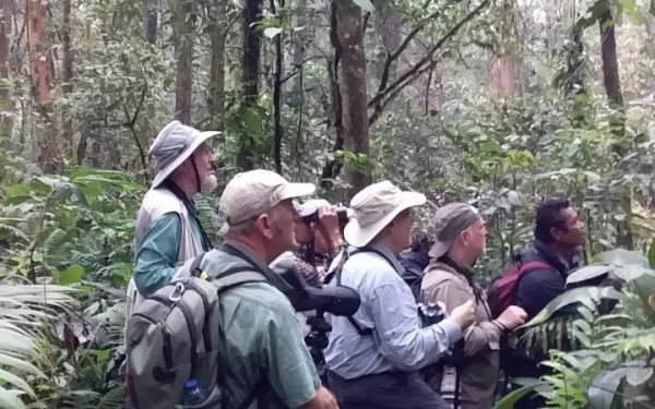 peter-roberts-birding-tours-to-gunung-gede-on-west-java-and-kerinci-seblat-national-park-includeded-tapan-road-on-jambi-and-the-waykambas-np-on-lampung-24