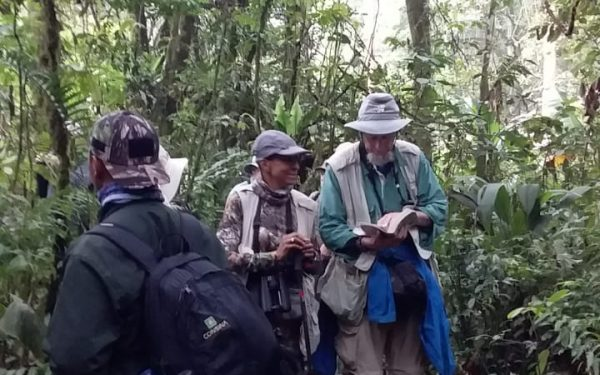 peter-roberts-birding-tours-to-gunung-gede-on-west-java-and-kerinci-seblat-national-park-includeded-tapan-road-on-jambi-and-the-waykambas-np-on-lampung-25