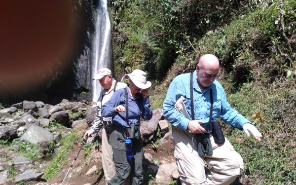 peter-roberts-birding-tours-to-gunung-gede-on-west-java-and-kerinci-seblat-national-park-includeded-tapan-road-on-jambi-and-the-waykambas-np-on-lampung-29