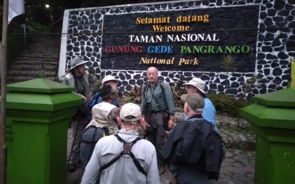 peter-roberts-birding-tours-to-gunung-gede-on-west-java-and-kerinci-seblat-national-park-includeded-tapan-road-on-jambi-and-the-waykambas-np-on-lampung-31