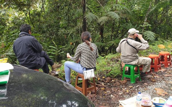 peter-roberts-birding-tours-to-gunung-gede-on-west-java-and-kerinci-seblat-national-park-includeded-tapan-road-on-jambi-and-the-waykambas-np-on-lampung-42