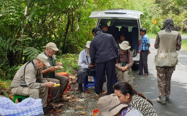 peter-roberts-birding-tours-to-gunung-gede-on-west-java-and-kerinci-seblat-national-park-includeded-tapan-road-on-jambi-and-the-waykambas-np-on-lampung-46