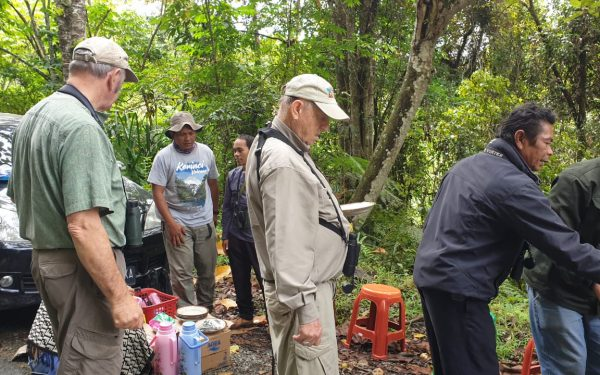 peter-roberts-birding-tours-to-gunung-gede-on-west-java-and-kerinci-seblat-national-park-includeded-tapan-road-on-jambi-and-the-waykambas-np-on-lampung-53