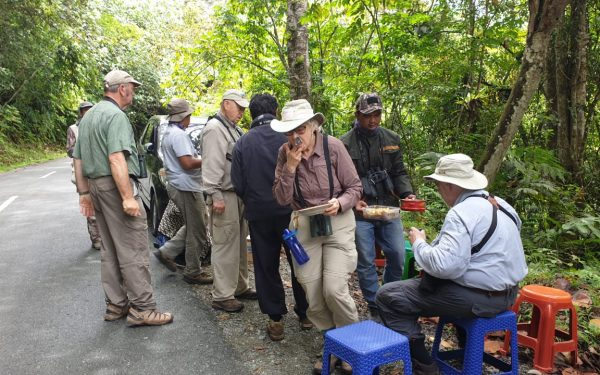 peter-roberts-birding-tours-to-gunung-gede-on-west-java-and-kerinci-seblat-national-park-includeded-tapan-road-on-jambi-and-the-waykambas-np-on-lampung-57