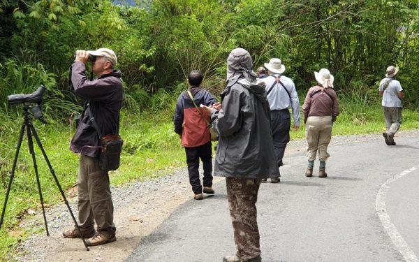 peter-roberts-birding-tours-to-gunung-gede-on-west-java-and-kerinci-seblat-national-park-includeded-tapan-road-on-jambi-and-the-waykambas-np-on-lampung-61