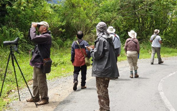 peter-roberts-birding-tours-to-gunung-gede-on-west-java-and-kerinci-seblat-national-park-includeded-tapan-road-on-jambi-and-the-waykambas-np-on-lampung-62