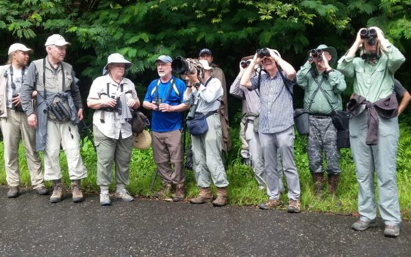 rockjumper-birding-tours-on-sulawesi-and-halmahera-birding-tours-103