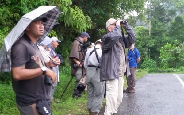 rockjumper-birding-tours-on-sulawesi-and-halmahera-birding-tours-106