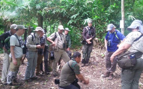 rockjumper-birding-tours-on-sulawesi-and-halmahera-birding-tours-115