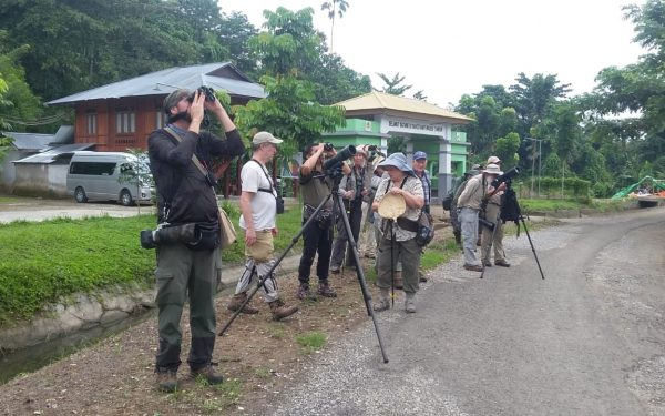 rockjumper-birding-tours-on-sulawesi-and-halmahera-birding-tours-120