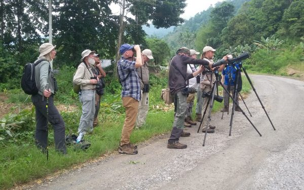 rockjumper-birding-tours-on-sulawesi-and-halmahera-birding-tours-121