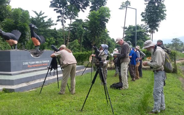 rockjumper-birding-tours-on-sulawesi-and-halmahera-birding-tours-122