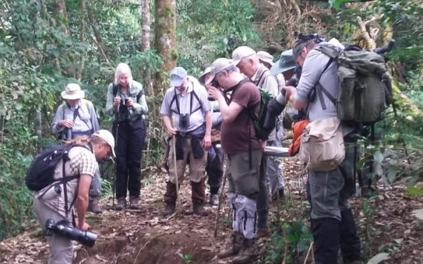 rockjumper-birding-tours-on-sulawesi-and-halmahera-birding-tours-18