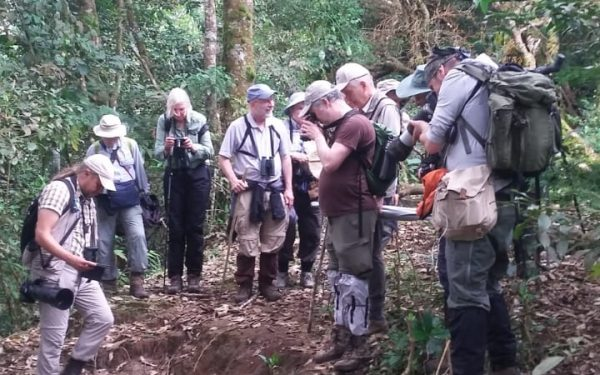 rockjumper-birding-tours-on-sulawesi-and-halmahera-birding-tours-19