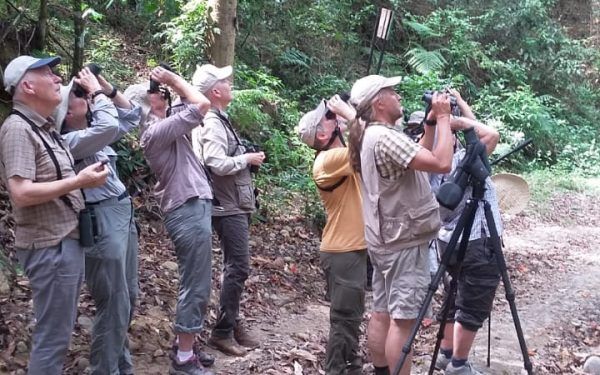 rockjumper-birding-tours-on-sulawesi-and-halmahera-birding-tours-23