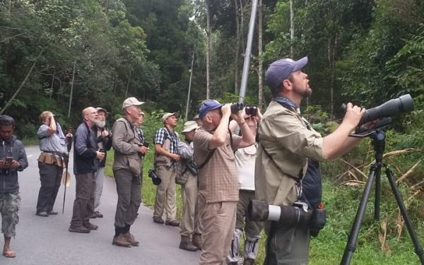 rockjumper-birding-tours-on-sulawesi-and-halmahera-birding-tours-36