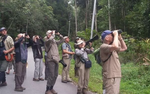 rockjumper-birding-tours-on-sulawesi-and-halmahera-birding-tours-55