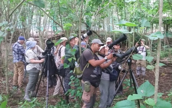 Rockjumper Birding Tours on Sulawesi and Halmahera Birding Tours
