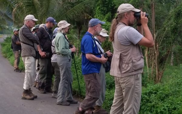 rockjumper-birding-tours-on-sulawesi-and-halmahera-birding-tours-83
