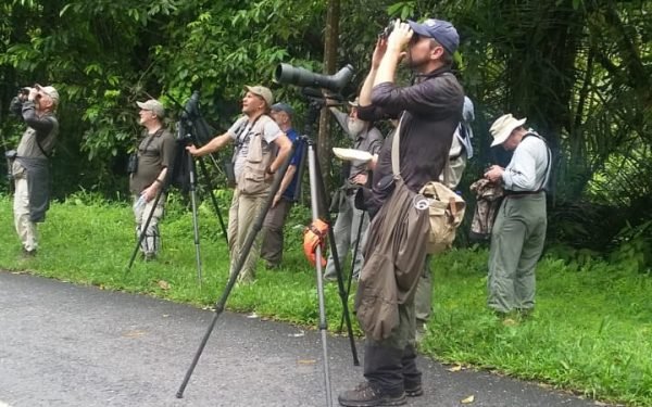 rockjumper-birding-tours-on-sulawesi-and-halmahera-birding-tours-85