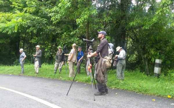 rockjumper-birding-tours-on-sulawesi-and-halmahera-birding-tours-86