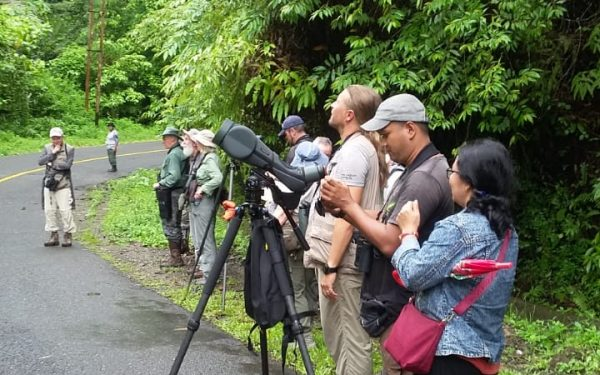 rockjumper-birding-tours-on-sulawesi-and-halmahera-birding-tours-99