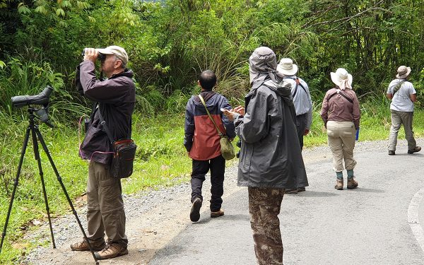 Sumatera Birwatching Tours on Jambi, West Sumatera and Way Kambas (14 Days / 13 Nights)